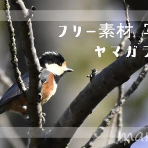 フリー素材・ヤマガラの写真