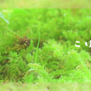 フリー素材・苔の写真