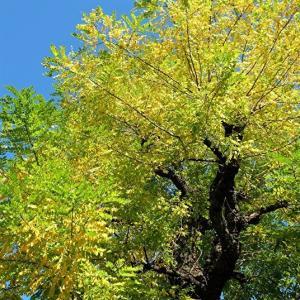 美しい季節。。。黄葉する樹木