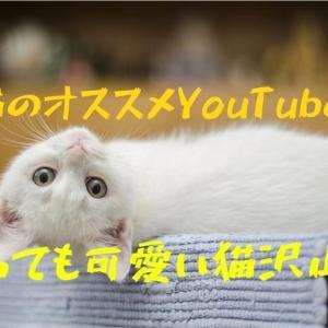猫のYouTubeオススメ8選!癒しに最適!【人気動物】