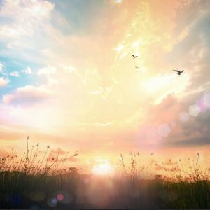 天赦日、一粒万倍日、大安 いったいどれが良い日なの?