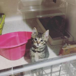 《今週の保護猫シェルター》