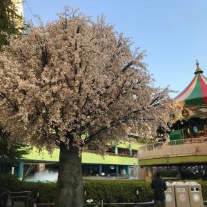 後楽園の桜!? と、ライアンの絆アップ