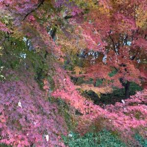 紅葉のトルネード