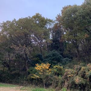 枯れ葉の行方