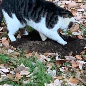 みーちゃん穴を掘る
