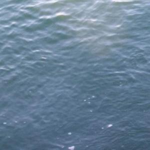 朝マズメにイナダとサゴシが爆釣しました。