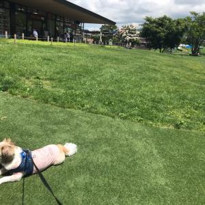 犬連れに最高 おすすめ軽井沢の宿とレストラン