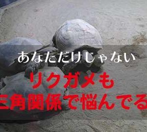 動物とゆっくり触れ合える足立区生物園をおすすめ【東京都内】