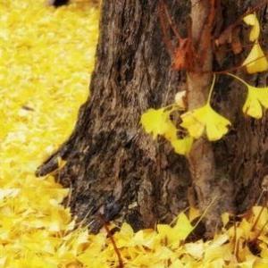 秋分~本格的な秋の到来 陰気を養う季節