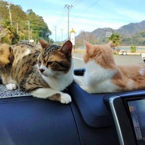 ドライブ大好き