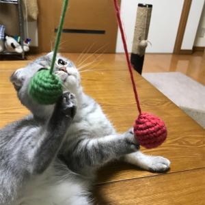 『手作り猫じゃらし』に夢中!!