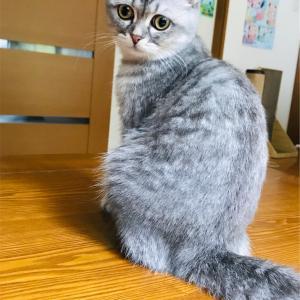 『猫の3大あるある』を言いたい!!