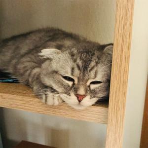 猫が行方不明になったらどうするの?