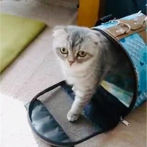 愛猫をペットホテルに預けてみて思うこと