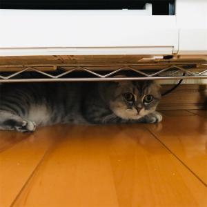 愛猫の最近の様子と猫のマッサージの仕方