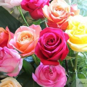 初めての薔薇の挿し木から4年が経ちました