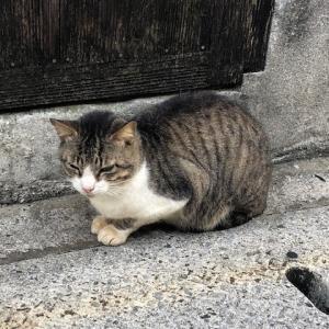 猫と仔ヤギとふかふかワンコ。 海と動物に癒された、石垣島のゆく年くる年。