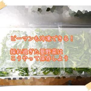 【節約】ピーマンも冷凍できる!採れ過ぎた夏野菜はこうやって保存しよう