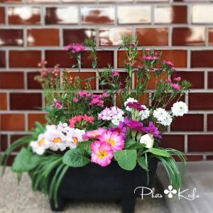 ピンクちゃんの仮住まい&花壇のぉ引っ越し✤