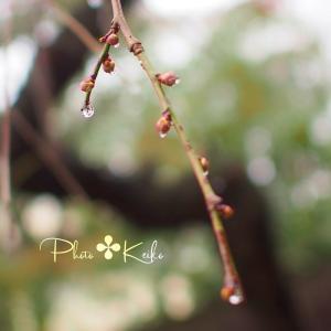 雨あがりの草花✤雫をクローズアップ✤