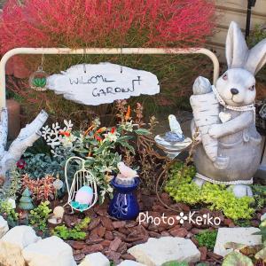 10月✤充実した花壇作りの秋でした...✤