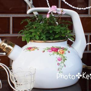 ぉ庭に仲間入りしたキッチン用品...✤