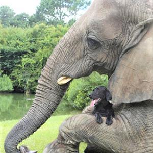 ベストフレンド(1)-ゾウの『Bubbles』と犬の『Bella』