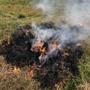 出雲まこも栽培のために田んぼを焼きました