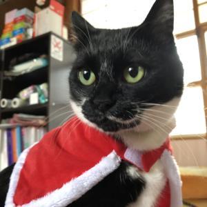 メリークリスマス!すーサンタがやって来た!