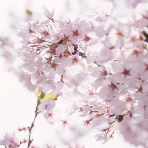 ★お花見で釘付けになったママさん