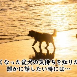亡くなった愛犬の気持ちを知りたい…つらい・寂しい思いを誰かに話したいあなたへ