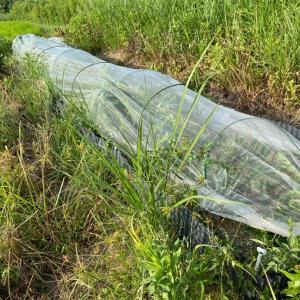 雑草に飲まれた地植えコーナー