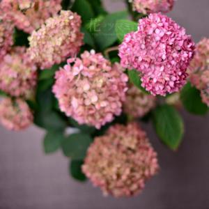 「梅雨の花と夏メニュー」