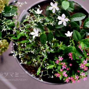 「お花の寄せ植えと間引き野菜のディナー」