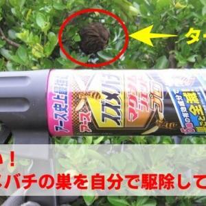 超怖い!勇気を出してスズメバチの巣を自分で駆除してみた【コツと感想をお伝えします】