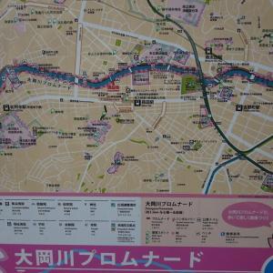【大岡川プロムナード】横浜市にあるサクラの名所