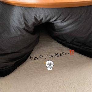 穴の中には…⁉️