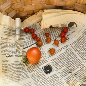 病気のトマトを何とかする