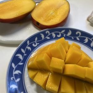 マンゴーの種を蒔いた♪