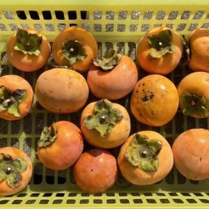 もみ殻燻炭を片付けて柿を取りました♪ 次のミッションは…