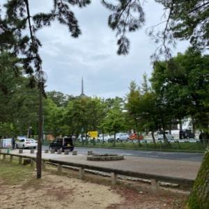 奈良公園の鹿 苺とサクサク王子を収穫…享年60日でした(ノД`)・゜・。