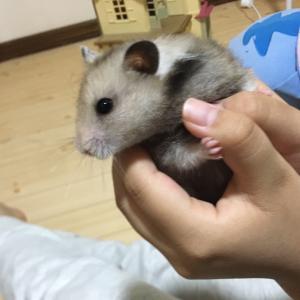 クゥちゃんうちの子記念日(生後6ヶ月)