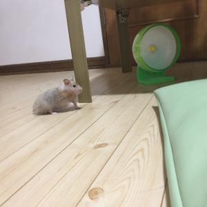 テンちゃんうちの子記念日(生後7ヶ月)