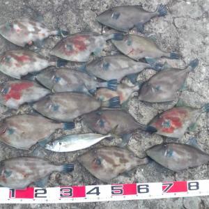 ウマヅラ大漁