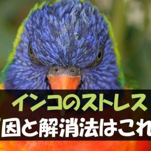 インコがストレスを感じる原因と解消法【行動をチェックしてサインを見逃すな!】