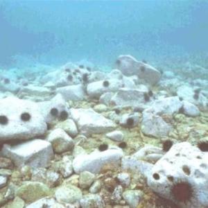 東京湾・相模湾のカワハギが減少した原因は何か