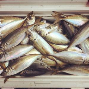 【東京湾奥】2019年のライトアジ(LTアジ)釣りを振り返る