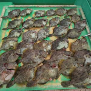 【東京湾・相模湾】2019年のカワハギ釣りを振り返る