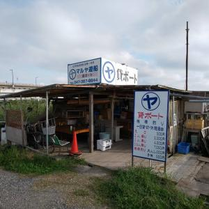 マルヤ遊船さんで黄昏る!江戸川放水路のハゼ釣り【桟橋釣り・ボートハゼ】